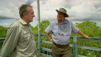 Amazonian Manatee