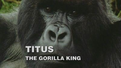 Titus: The Gorilla King