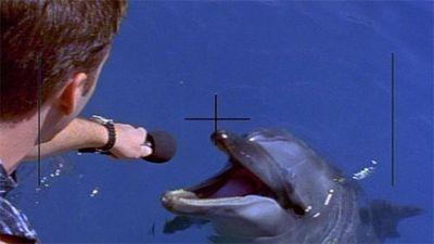 Radio Free Flipper