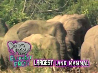 Elephants, Beakmania & X-Rays