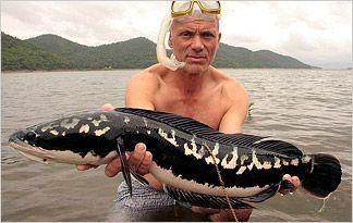 Killer Snakehead