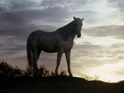 A Dream of Wild Horses