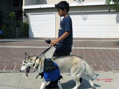A Dog and His Boy/Mobile Vet