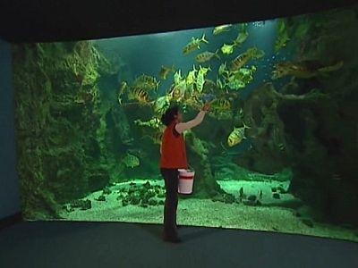 Les grands aquariums : une fenêtre sur l'océan