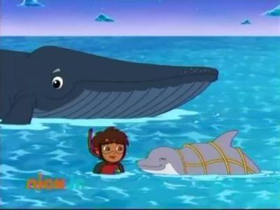 Ocean Animal Rescuer
