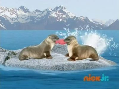 Save the Sea Lions!