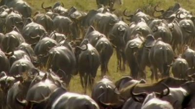 Science of Great Migrations