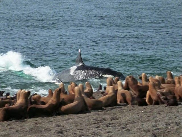 Hunting and Escaping