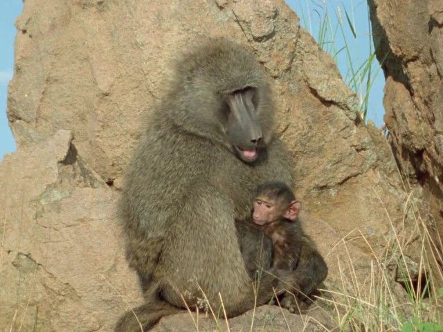 Friends and Rivals