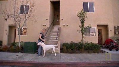 Diego and Berkeley (Warrior Dog)