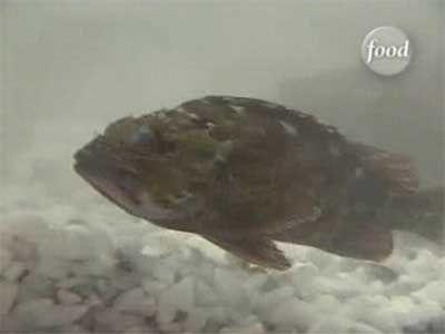 Chen vs Hiroshi Yamanobe (Scorpionfish)