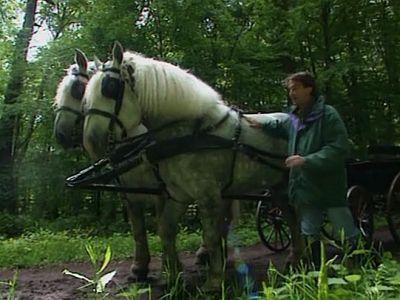 La vie d'un cheval
