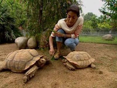 Les tortues : quand les carapaces passent