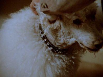 The Canine Collar