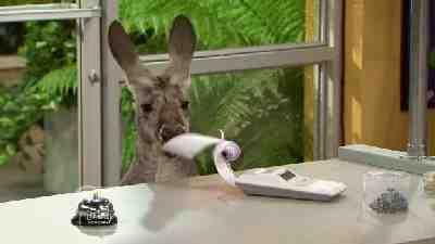 Kangaroos & Chaos