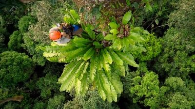 Jungle Special