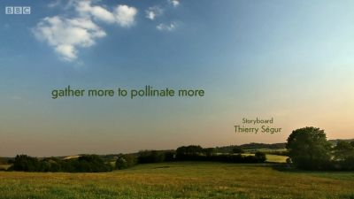 gather more to pollinate more