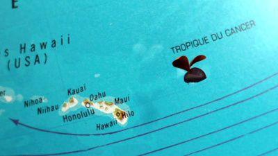 umbrella and coconut trees