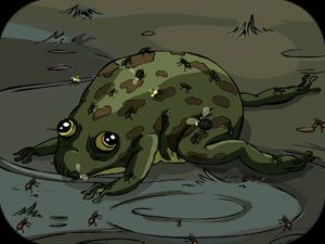 Bloaty The Frog