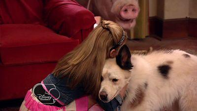 Dog With A Hog