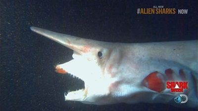 Alien Sharks of the Deep