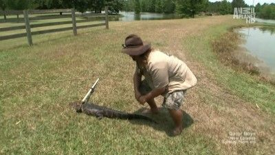 Swamp Monster Attack