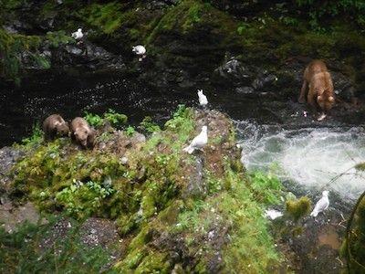 Bear Kingdom