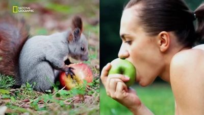 Animal vs. Human