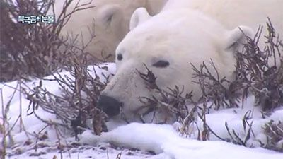 Tears of the Polar Bear (1)