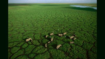 George Steinmetz: Photos of Africa, taken from a flying lawn chair