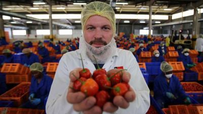 Sweet Piquante Peppers, The Plastic Crisis, Yoghurt
