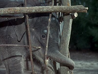Flipper and the Elephant (1)