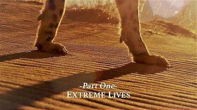 Super Cats - Extreme Lives