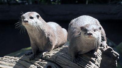 Bindi & the Otters