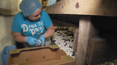 Mushroom Farming, Map Making, Medical Gloves