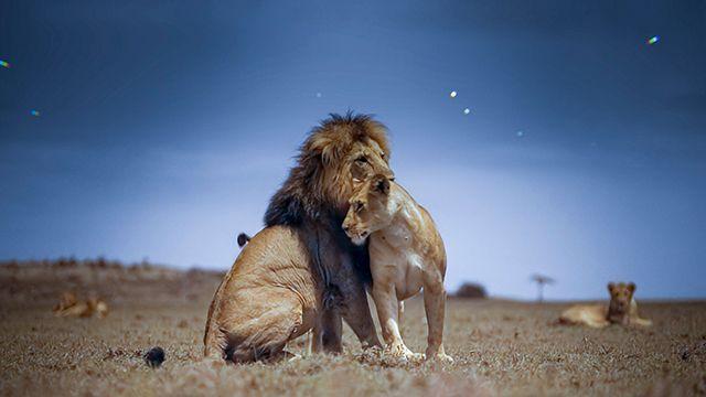 Lion Grasslands