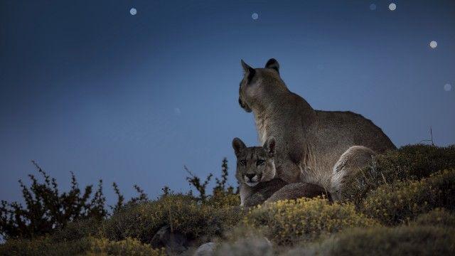 Puma Mountain