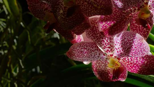 David Attenborough's Kingdom of Plants